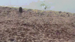 Video: Đang tắm nắng, hoảng hồn thấy trăn anaconda bò lên từ dưới nước