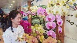 Chùm ảnh: La liệt hoa đào, hoa lan, quất cảnh đua nhau xuống phố
