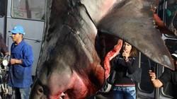 """Cá mập trắng """"khủng"""" bị treo ngược khiến nhiều người xôn xao"""