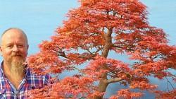 """Cây cứ gió lạnh là """"khoác áo mới"""" đỏ rực vạn người mê, về Việt Nam bán gần 5 triệu"""