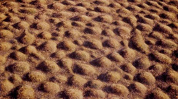 Bí ẩn vùng đất bỗng nhiên mọc lên hàng nghìn nấm mồ