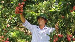 Trái cây Việt tăng cạnh tranh, thâm nhập thị trường khó chiều