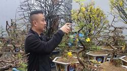 Đà Nẵng: Vì sao nhiều người thích thuê mai Tết thay vì mua đứt?