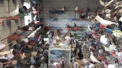 """Thu lãi trăm triệu mỗi tháng nhờ bán con vật """"ăn ít, đẻ nhiều"""""""