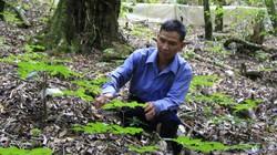 Những nông dân đổi đời nhờ trồng loài sâm quý  ở vùng nước đắng