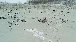 """""""Tuyết xanh"""" xuất hiện ở thành phố Nga từng có thiên thạch phát nổ khiến người dân hoang mang"""