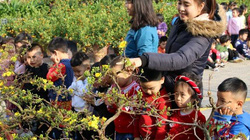 Phố núi Sơn La ngập tràn sắc hoa, cây cảnh những ngày cận tết