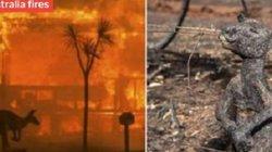 Nhân loại chỉ còn 10 năm cứu Trái đất khỏi thảm họa đại tuyệt chủng