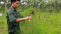 Hà Nội: Quỹ HT nông dân đạt 595 tỷ, lớn nhất trong 63 tỉnh, TP