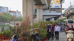 Ảnh, clip: Ga đường sắt trên cao hóa chợ cây cảnh ngày giápTết
