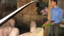 Giá heo hơi hôm nay 16/1: Thịt nhập về hàng nghìn tấn, lợn hơi đồng loạt giảm