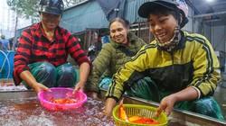 Chợ cá chép lớn nhất Hà Nội đỏ rực trước ngày tiễn ông Táo lên trời