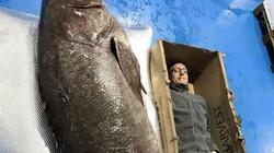 """Cận cảnh cá mú """"thành tinh"""" khổng lồ, nặng gần 2 tạ"""