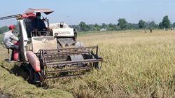 """Nông dân quận Bình Tân (TP.HCM) làm lúa trên """"đất kim cương"""""""