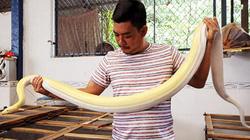 Trai 8x nuôi nghìn con trăn bạch tạng, có con dài 7m, nặng nửa tạ