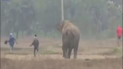 """Video: Voi rừng tới làng phá, người đàn ông ra chụp ảnh """"tự sướng"""" và cái kết thót tim"""