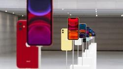 Nên chọn iPhone 11 màu gì để du Xuân cho chất?