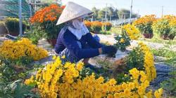 Đà Nẵng: Làng Nhơn Thọ ăn Tết to do bán hoa đắt hàng