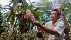 Ở đây trồng lan rừng thơm lừng, giò nghinh xuân giá hàng triệu đồng