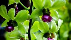 Loại hoa cực hiếm, 5 năm mới nở, giá một cây gần 5 tỷ, đại gia cũng khó mua