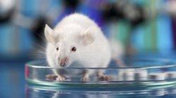 Loài vật chịu hy sinh để cho hàng triệu người được sống