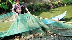 Vùng đất nuôi loài cá bổi, kéo bắt hàng chục tấn, bán 57 ngàn/ký