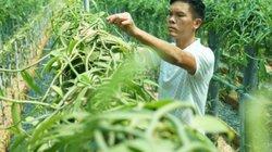 Người gieo hương vani nồng nàn trên đất Việt