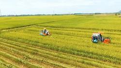 VINASEED đồng hành và phát triển cùng nông nghiệp Việt Nam