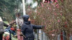 Dự báo thời tết ngày 22/1 (28 Tết): Miền Bắc ấm hơn