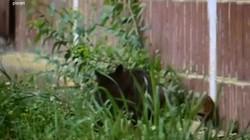 Video: Chuột một mình xông thẳng vào lãnh địa của 5 con mèo lớn, đánh cho cả đám chạy te tua