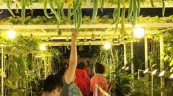Khánh Hòa: Vườn bầu hồ lô, bí đỏ, cà tím trong phố hút người xem