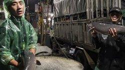 Chợ cá lớn nhất Thủ đô ngày 28 Tết, có cá trắm khủng cả chục cân