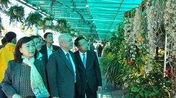 Lạc lối giữa thiên đường với đủ loại phong lan ở xứ sở ngàn hoa