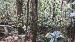 Kon Tum: Tìm thấy 1 kiểm lâm bị mất liên lạc khi đi tuần tra rừng