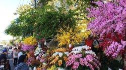 Rực rỡ sắc xuân, du khách chụp ảnh nườm nượp tại Nha Trang