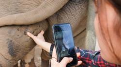 Ngày cuối năm ở nơi làm móng, khám răng cho con vật khổng lồ