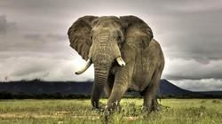 15 loài vật khổng lồ nhất thế giới: Sự thật ít người biết