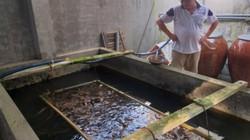 Biến chuồng heo cũ thành bể nuôi lươn, bắt hàng tạ bán 160 ngàn/kg