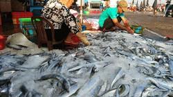 Lộc biển đầu năm: Ngộn ngộn cá tươi, cá hố bán 40-50 ngàn/ký