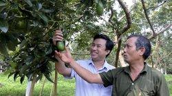 Làm giàu ở nông thôn: Trồng thứ bơ trái vụ bán qua Tết, có tiền tỷ