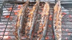 Cá chuồn biển Rạng nướng than, ăn 1 miếng thịt tan trong miệng
