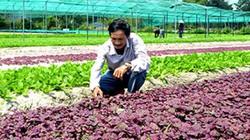 Xây dựng rau sạch Bình Triều thành sản phẩm OCOP đặc trưng