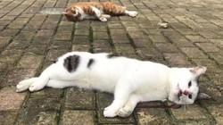 Nhiều chó mèo ở Trung Quốc bị ném từ nhà cao tầng xuống đất vì nghi lây dịch Corona