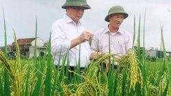 Giống lúa tím thảo dược có thể ngừa ung thư, tiểu đường, béo phì