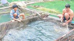 Nuôi cá ngon ở lòng hồ giúp nông dân Na Hang khá giả