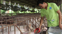Giá heo hơi hôm nay 3/2: Mất đà tăng, nhập thêm 100.000 tấn thịt
