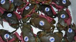 """Cà Mau: Giá cua biển to bự """"bốc hơi"""" mạnh do dịch virus Corona"""
