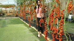 Lâm Đồng: Làm nông nghiệp công nghệ cao để hút khách du lịch