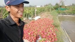 Làm báo cùng Dân Việt: Giữa dịch corona, thương nông dân mình quá!