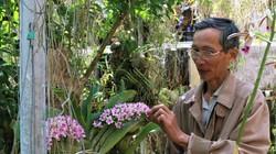 Vườn lan rừng tiền tỷ ở phố núi, giò giã hạc đột biến giá 100 triệu